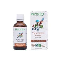 Herbiolys gemmothérapie Vigne vierge/Ampélopsis 50mL BIO - Ampelopsis weitchi/triscupidata