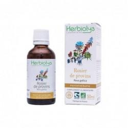 Herbiolys PHYTO Rosier de provins 50mL BIO - Rosa gallica