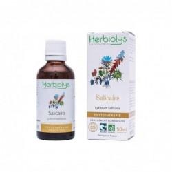 Herbiolys PHYTO Salicaire 50mL BIO - Lythrum salicaria