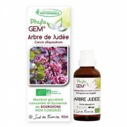 Gemmothérapie Arbre De...