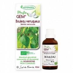 Gemmothérapie Bouleau Verruqueux