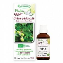 Gemmothérapie Chêne Glands...