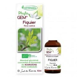 Gemmothérapie Figuier