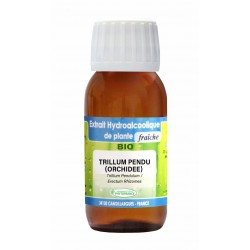 TRILLUM PENDU (ORCHIDEE)