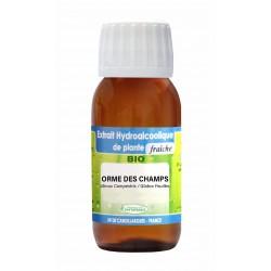ORME DES CHAMPS