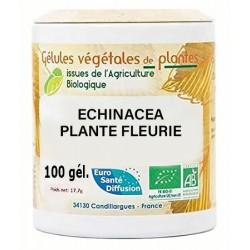 Gélules végétales echinacea plante fleurie